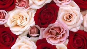 valentinesday-tips-instagram